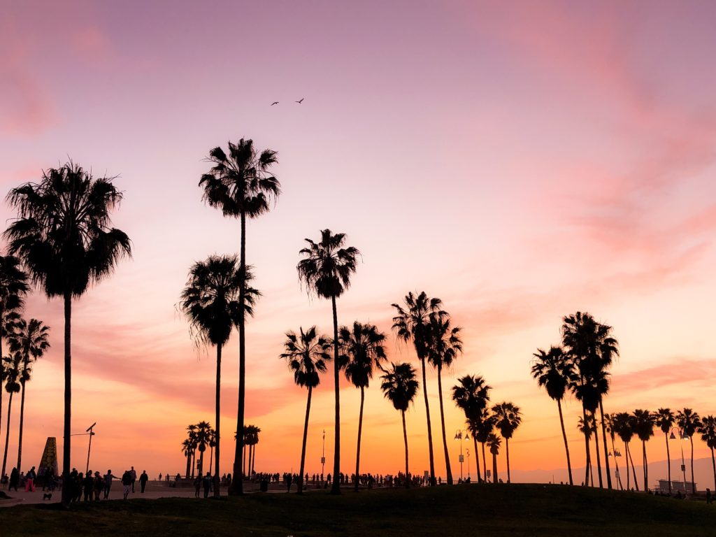 Palm Trees during sunset, home of the California Insurance Fraud Prevention Act